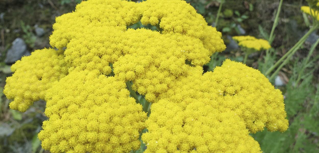 leonie-cornelius-rudbeckia1-yellow-garden-design-ireland-5