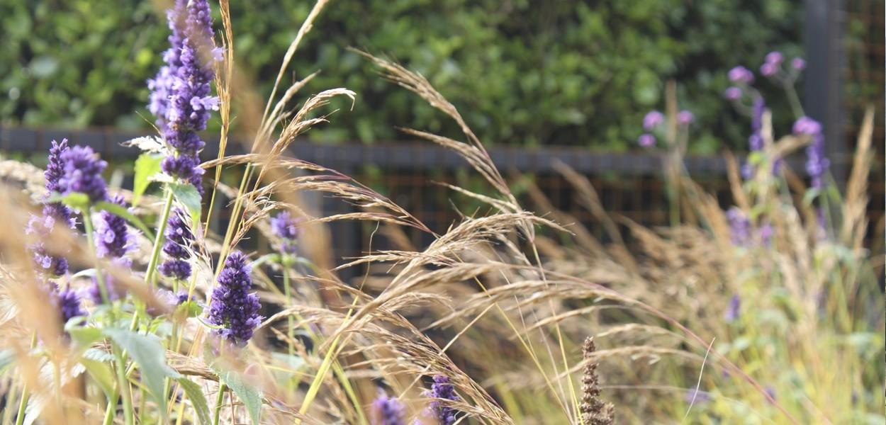 Garden Designer Leonie Cornelius: Naturalistic Planting