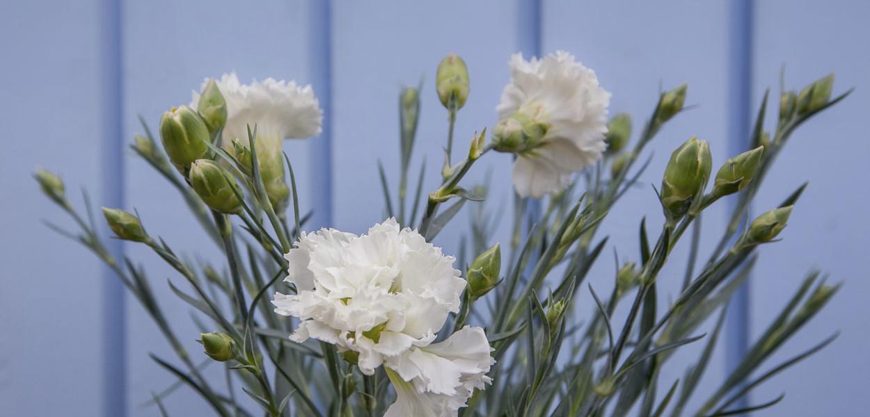 leonie-cornelius-garden-design