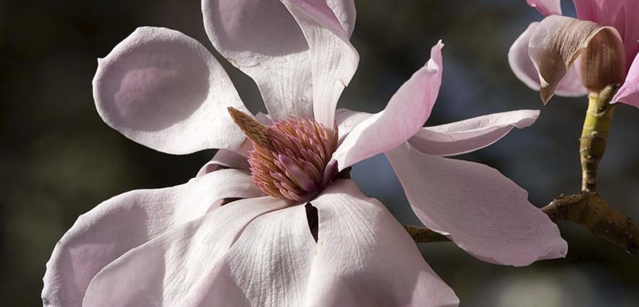 leonie-cornelius-cherry-blossom-birr-castle-colin-gillen-