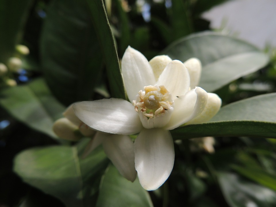 flower-94393_960_720 (1)