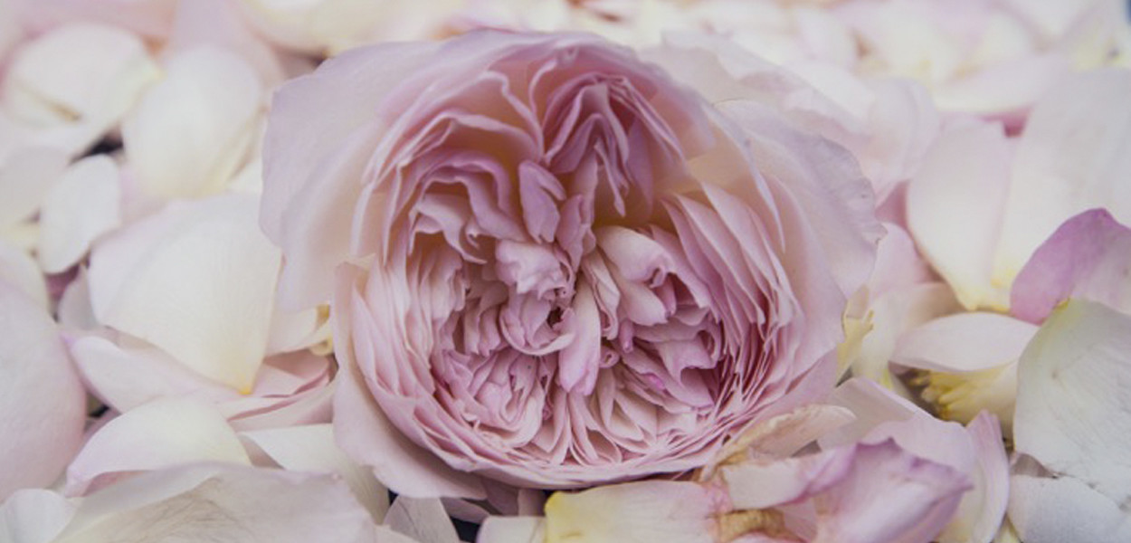 leonie-cornelius-rose-de-mai-colin-gillen-L'Occitane-chelsea-magee.5