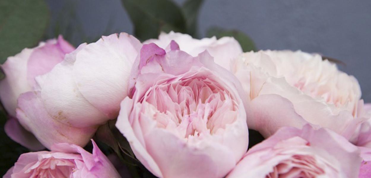 leonie-cornelius-rose-de-mai-colin-gillen-L'Occitane-chelsea-magee.6