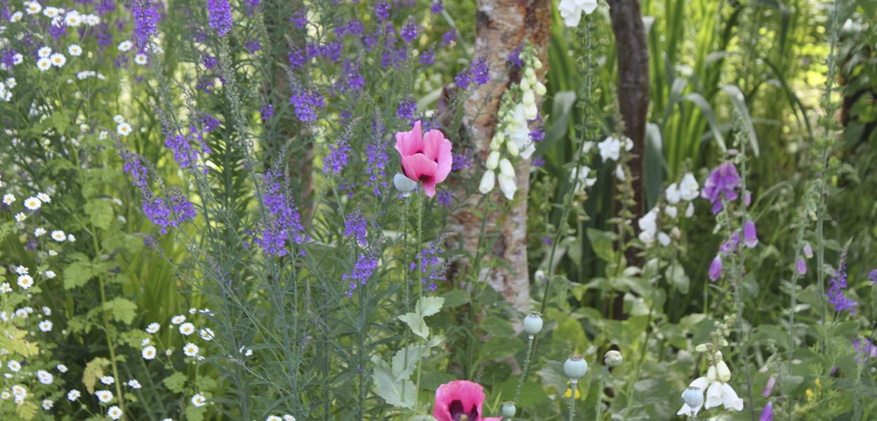 leonie-cornelius-mail-on-sunday-strootmann-landschapstarchitecten-colin-gillen-chaumont-sur-loire-billie-holiday-poppy.1