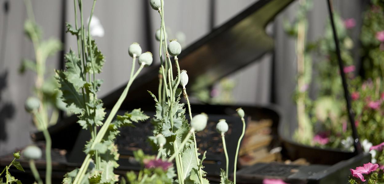 leonie-cornelius-mail-on-sunday-strootmann-landschapstarchitecten-colin-gillen-chaumont-sur-loire-billie-holiday-poppy.3