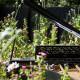 leonie-cornelius-mail-on-sunday-strootmann-landschapstarchitecten-colin-gillen-chaumont-sur-loire-billie-holiday-poppy.6