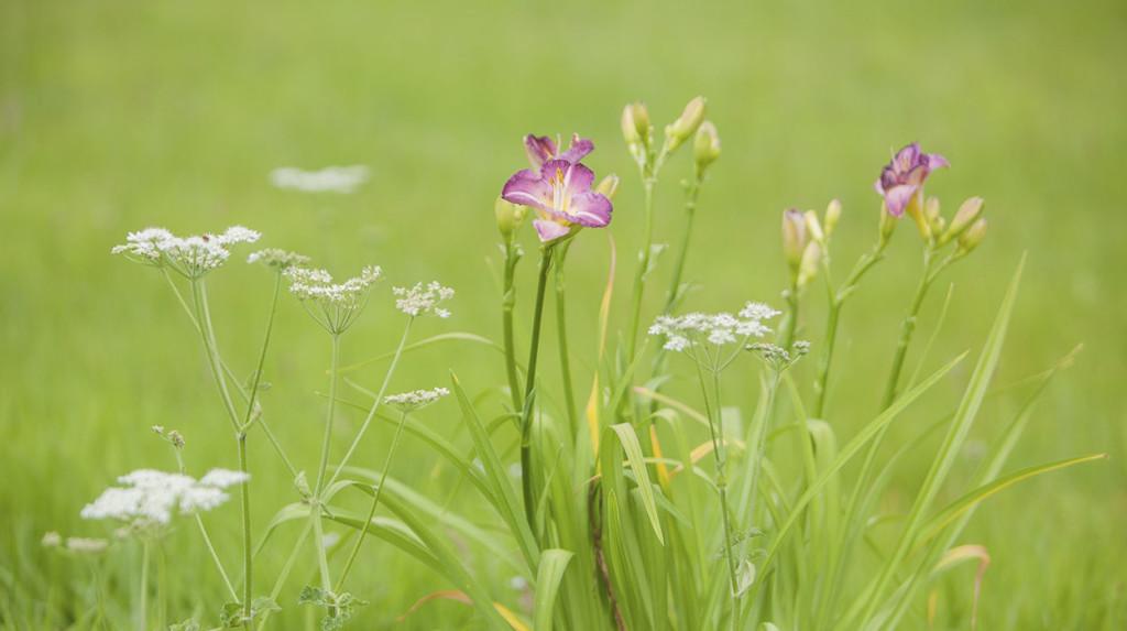 leonie-cornelius-colin-gillen-daylily-hazelwood-house-garden-woodies-2