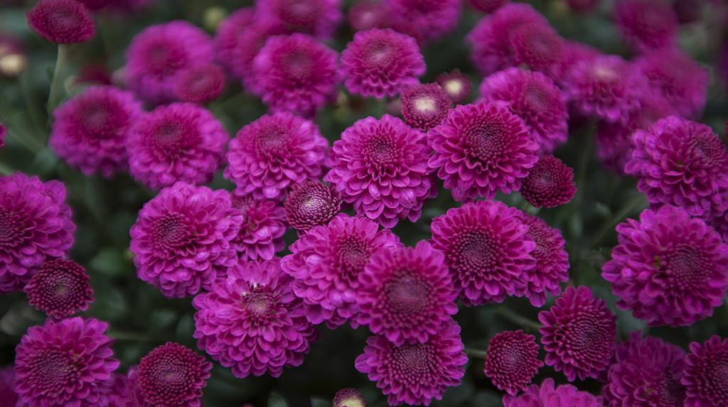 leonie-cornelius-colin-gillen-garden-design-ireland-2