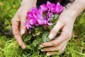 GARDEN 101-Garden therapy