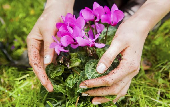 leonie-cornelius-colin-gillen-garden-designer-super-garden-rte-woodies-1