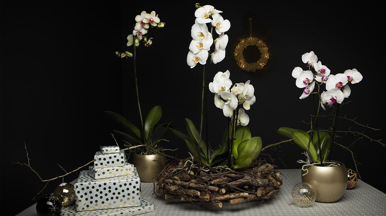 leonie-cornelius-suzy-mccanny-photography-woodies2