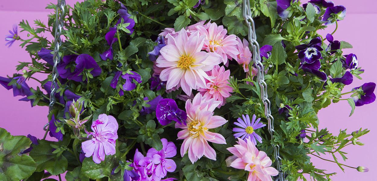 leonie-cornelius-colin-gillen-rte-super-garden-bloom-woodies-1