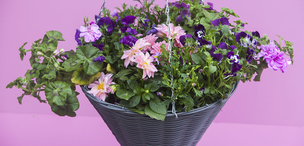 leonie-cornelius-colin-gillen-rte-super-garden-bloom-woodies-2