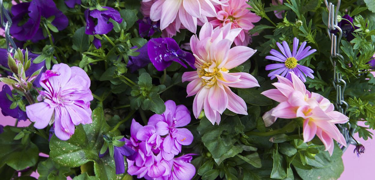 leonie-cornelius-colin-gillen-rte-super-garden-bloom-woodies-3