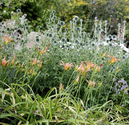 'GARDEN ESSENCE'   Online garden design package