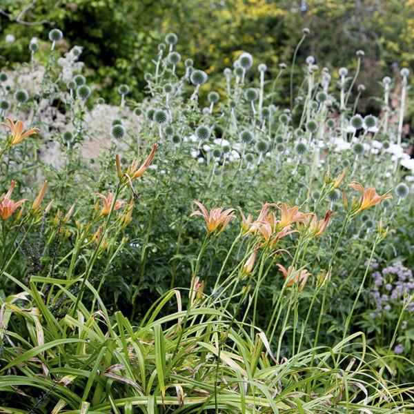 leonie-cornelius-colin-gillen-dream-gardens-rte-super-garden-bloom-woodies-2