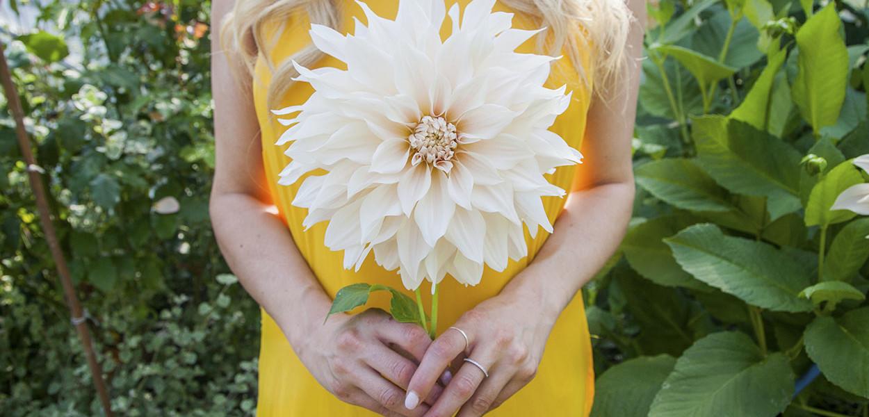 leonie-cornelius-garden-designer-ireland-dahlia-bloom-4