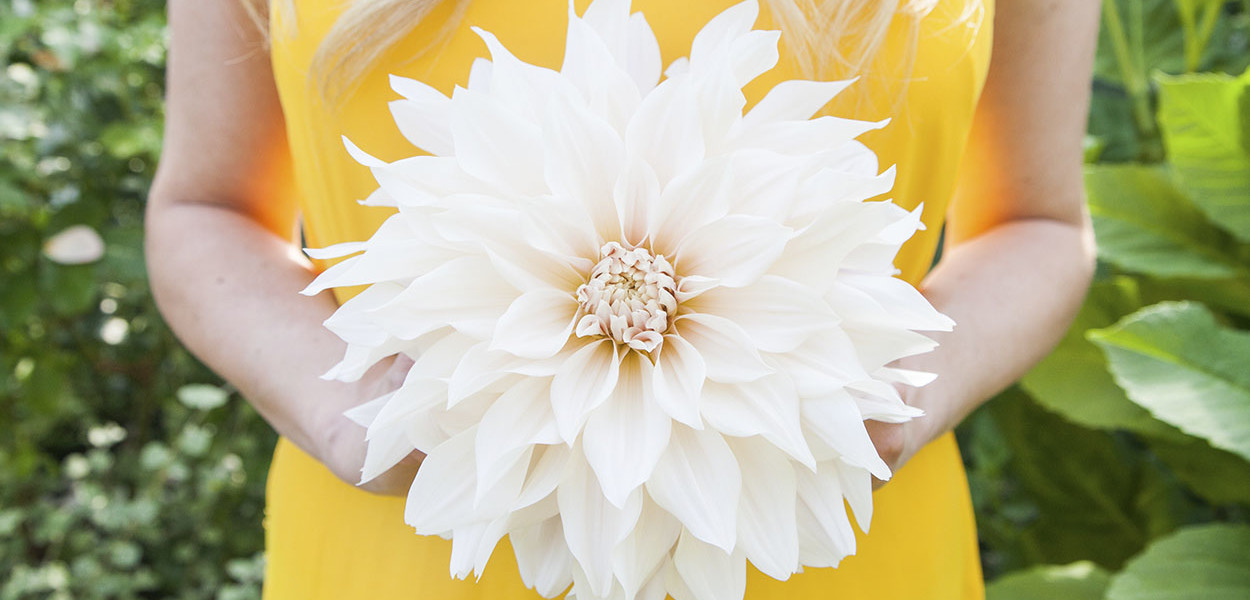 leonie-cornelius-garden-designer-ireland-dahlia-bloom-5