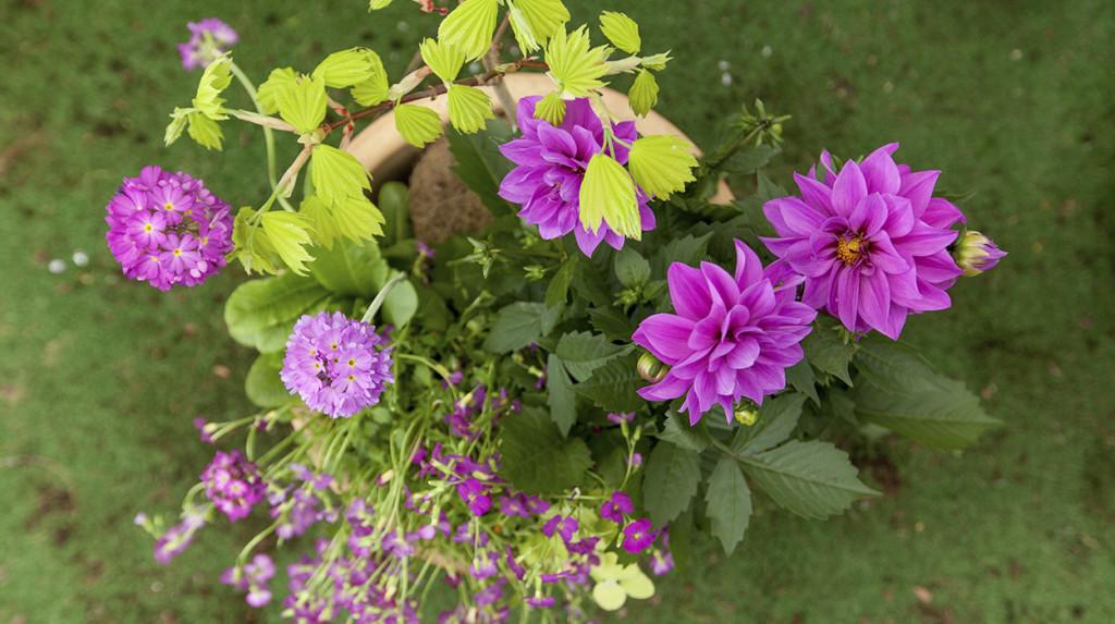 leonie-cornelius-garden-designer-ireland-horkans-bloom-chelsea