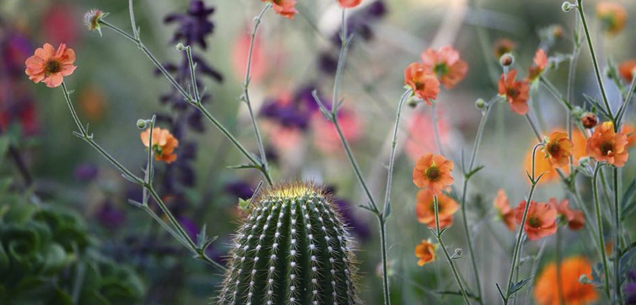 leonie-cornelius-jimi-blake-garden-huntingbrook