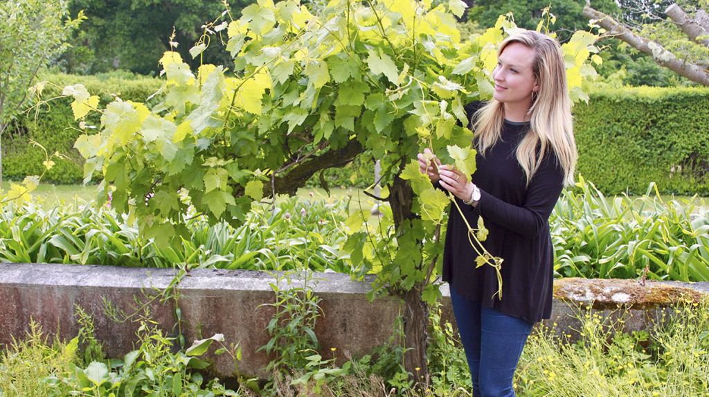 wine-grapes-vinoveritas-organicwine-biodynamic-wine-leonie-cornelius1
