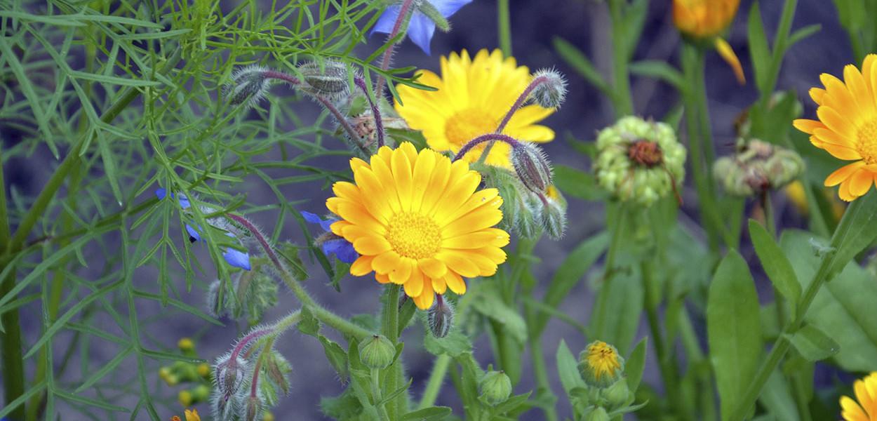 leonie-cornelius-garden-designer-ireland-kithchen-garden-detox-fitness-4