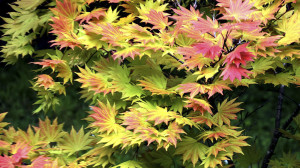 leonie-cornelius-garden-designer-leaf-shapes-colingillen-lisarichards-wildatlanticway5
