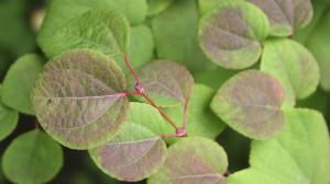 leonie-cornelius-garden-designer-leaf-shapes-colingillen-lisarichards-wildatlanticway6