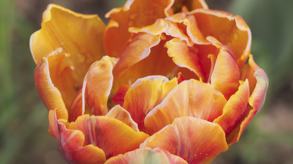 erysimum-garden-design-leonie-cornelius-7