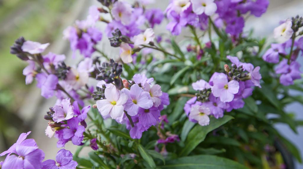 leonie-cornelius-garden-designer-ireland-gardeninpiration-2