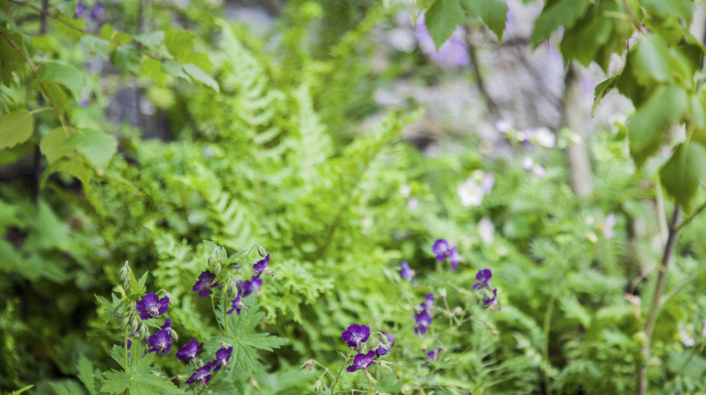 leonie-cornelius-japanese-bloom-in-the-park-dublin-bord-bia12