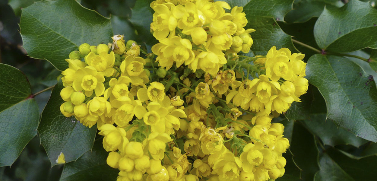 leonie-cornelius-rudbeckia1-yellow-garden-design-ireland-6