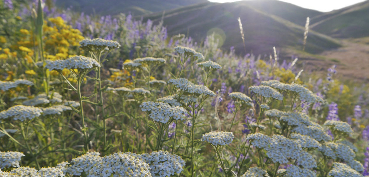 leonie-cornelius-rudbeckia1-yellow-garden-design-ireland-8